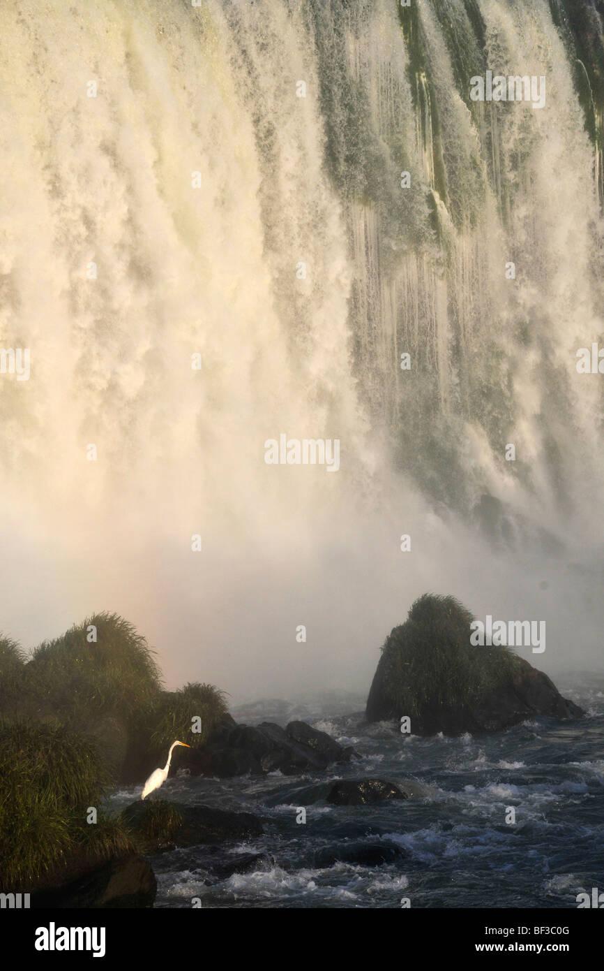Egret, Egretta alba, at Iguazu Falls, Foz do Iguacu, Parana, Brazil - Stock Image