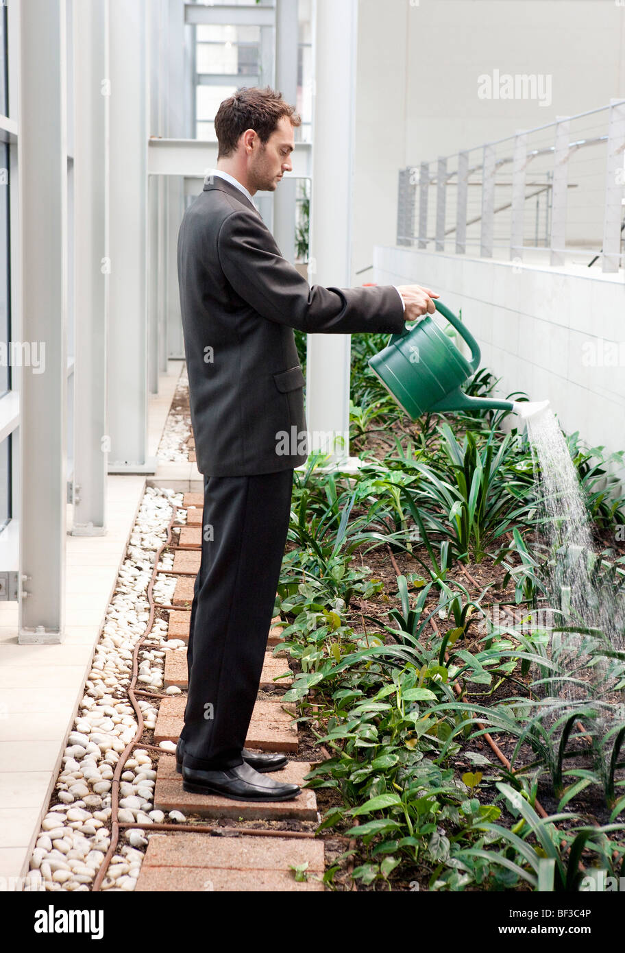 Business Man Watering Plants At Office Stock Photo 26505606 Alamy