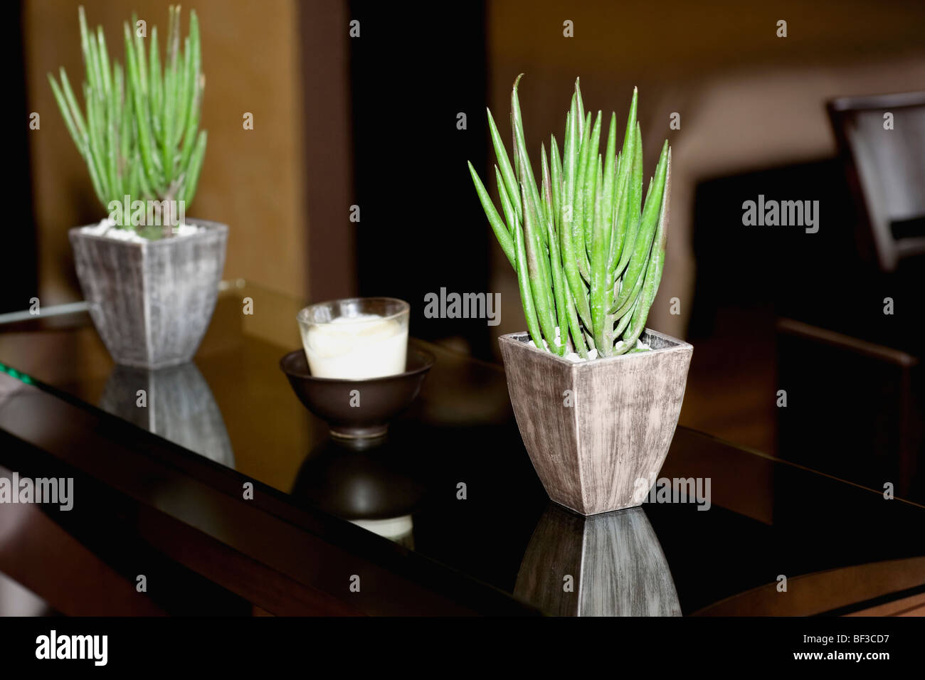 Two houseplants on a table - Stock Image
