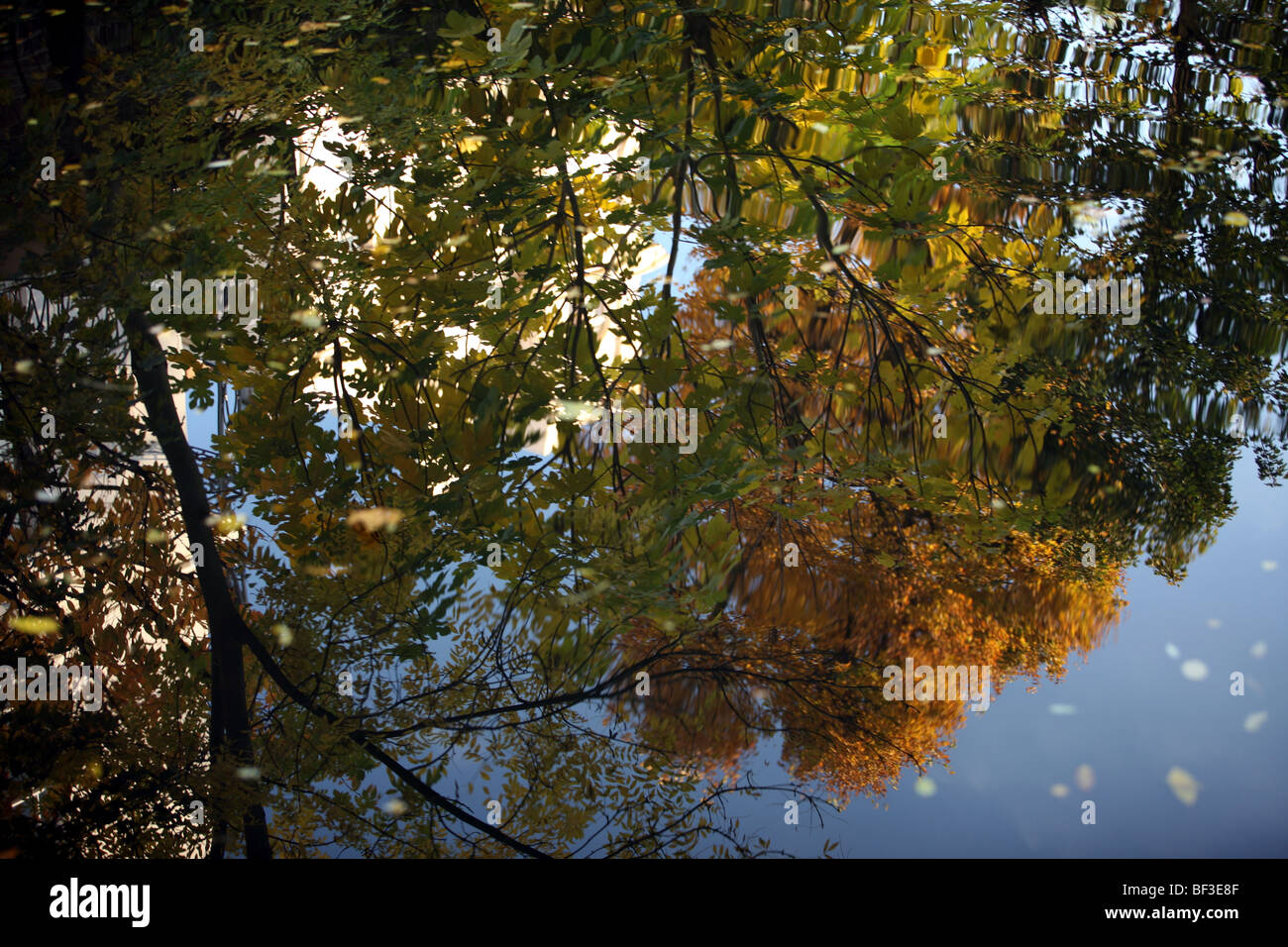 Leaves reflected in the Regents canal London - Stock Image