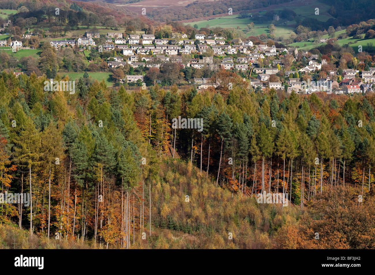 New and Old fir trees, saplings and hillside housing at Hathersage village - Stock Image