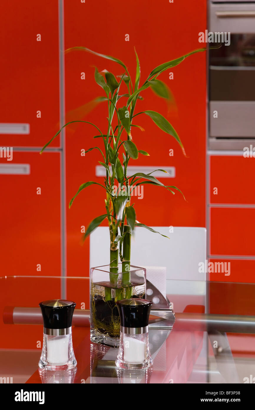 Lucky bamboo with two salt shakers on a table - Stock Image