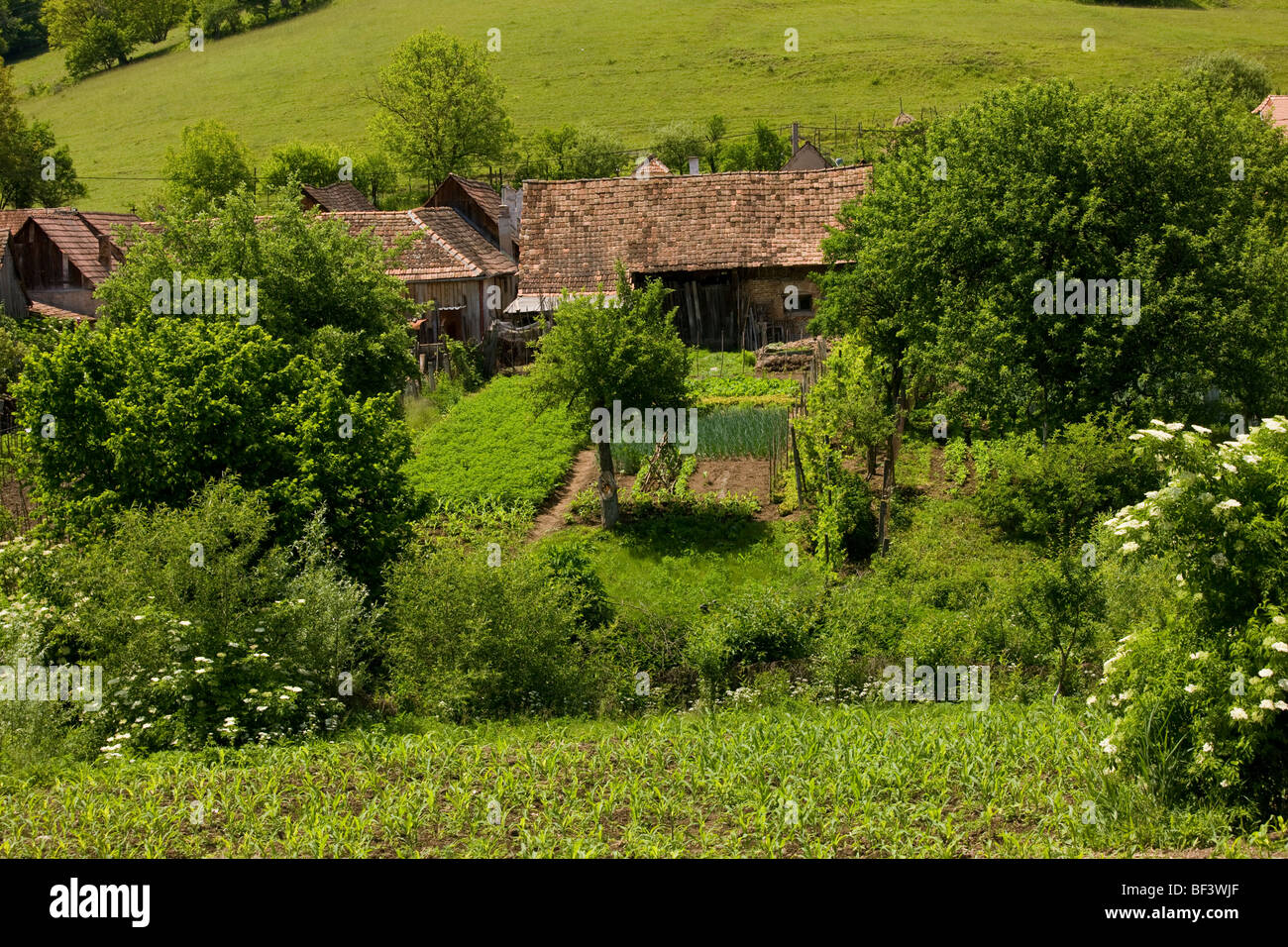 Vegetable gardens and courtyards of Saxon houses in village of Cris, Transylvania. - Stock Image
