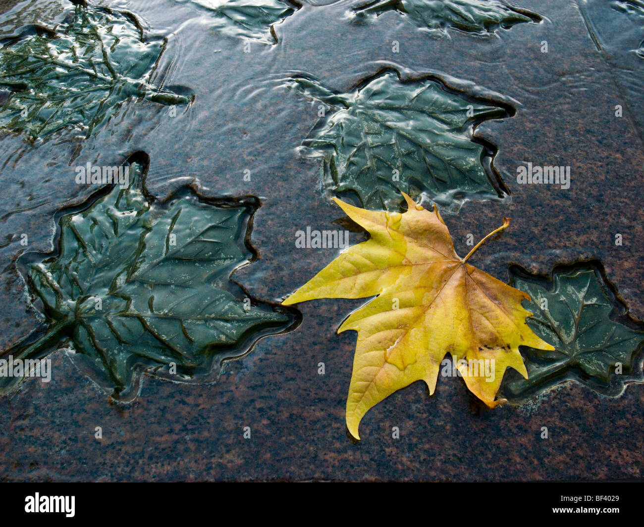 Canadian Armed Services War memorial with autumn leaf, Green Park, London UK - Stock Image