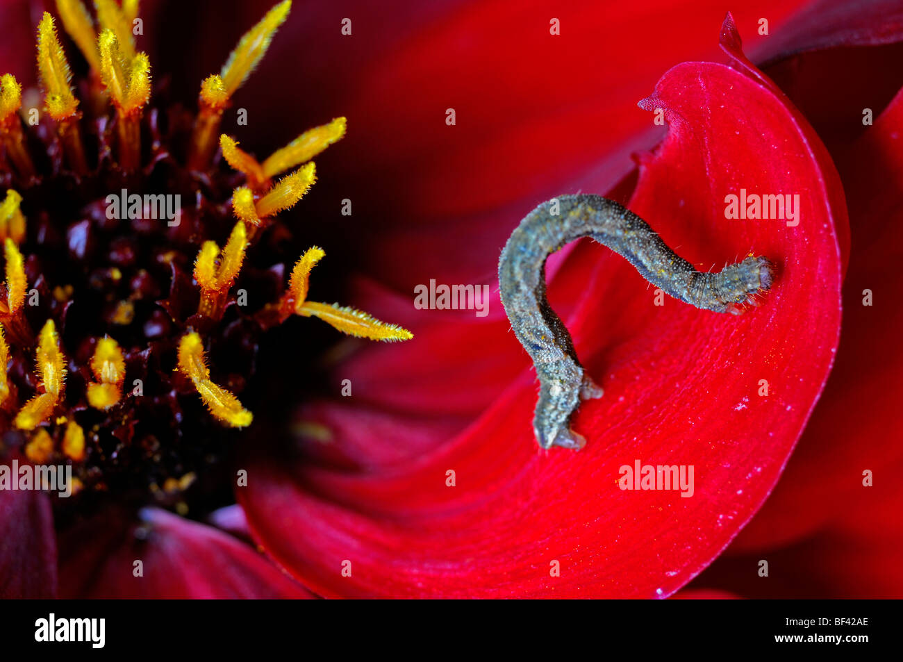 Tiny Caterpillar Stock Photos & Tiny Caterpillar Stock Images - Alamy