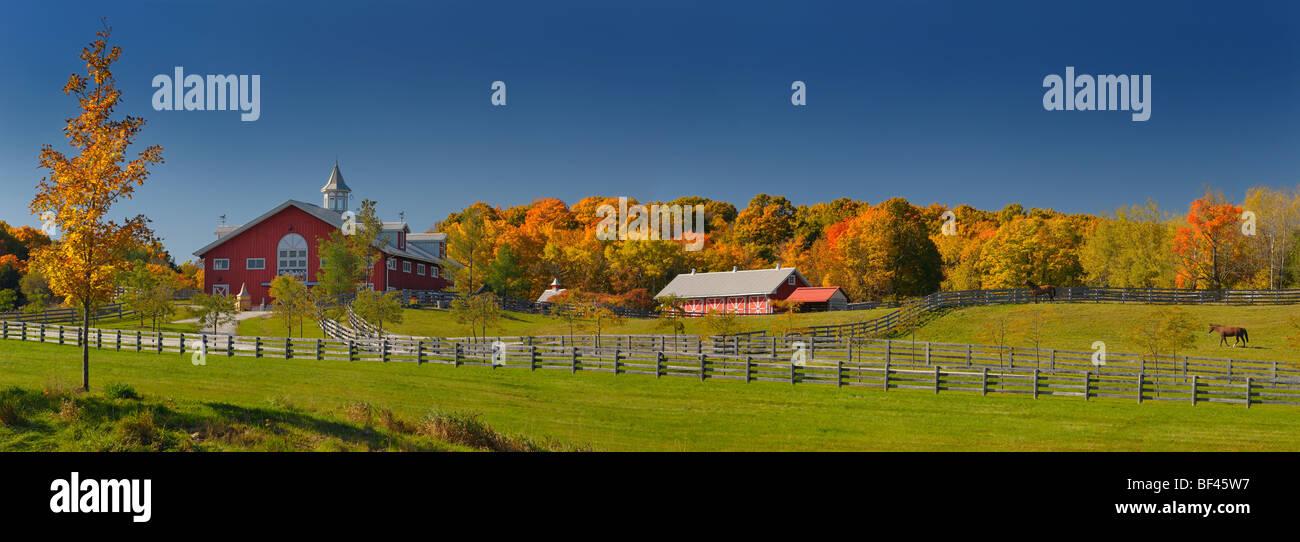 Panorama of Fall foliage and horses at a horse farm in Caledon Ontario Canada - Stock Image