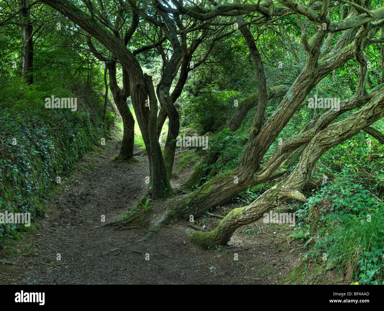 Romantic path, Brittany, France, Europe - Stock Image