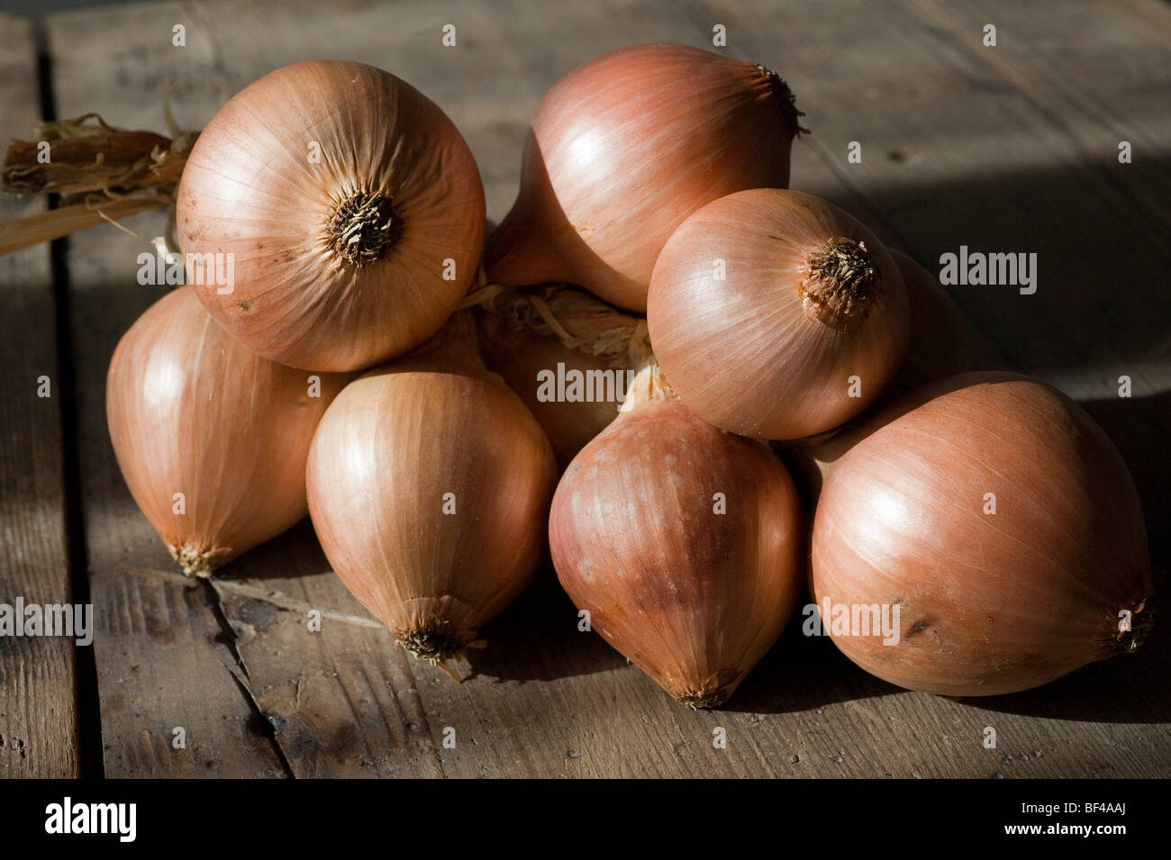 Onions from Roscoff, Brittany, known for their mild taste - Stock Image