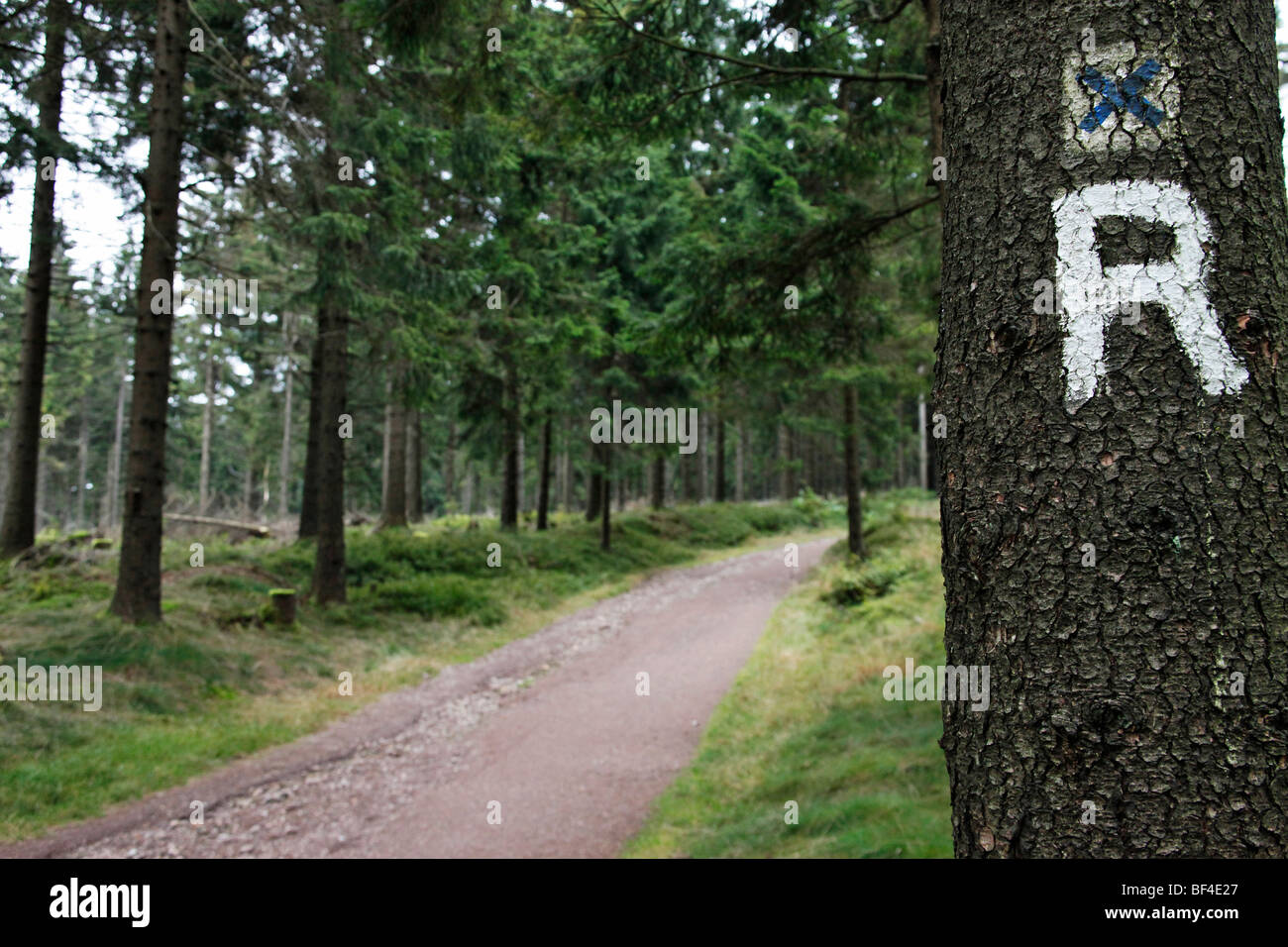 R as a sign for the Rennsteig hiking trail, an international trail, Oberhof, Thuringia, Germany, Europe - Stock Image