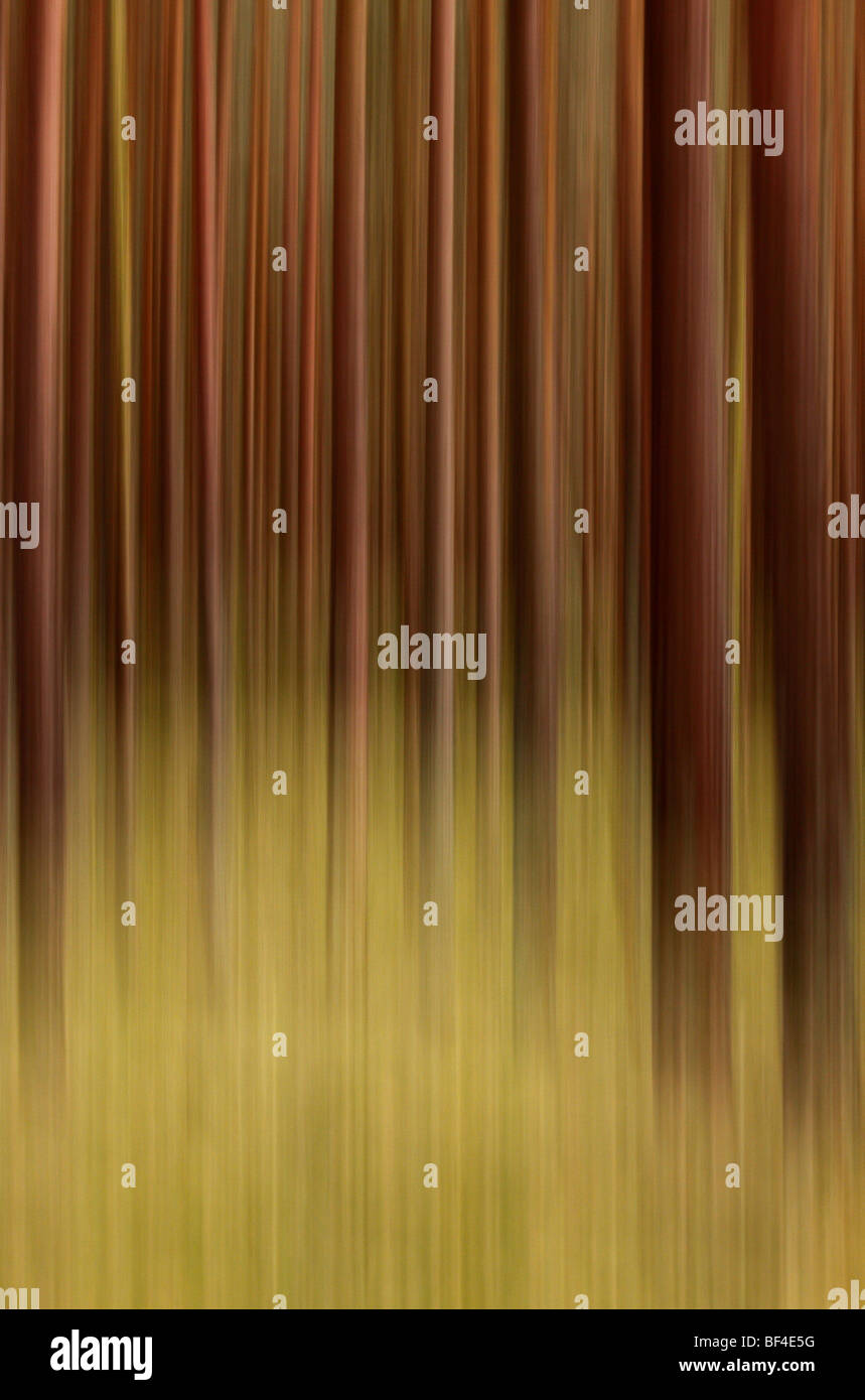 Forest, abstract and blurred Stock Photo
