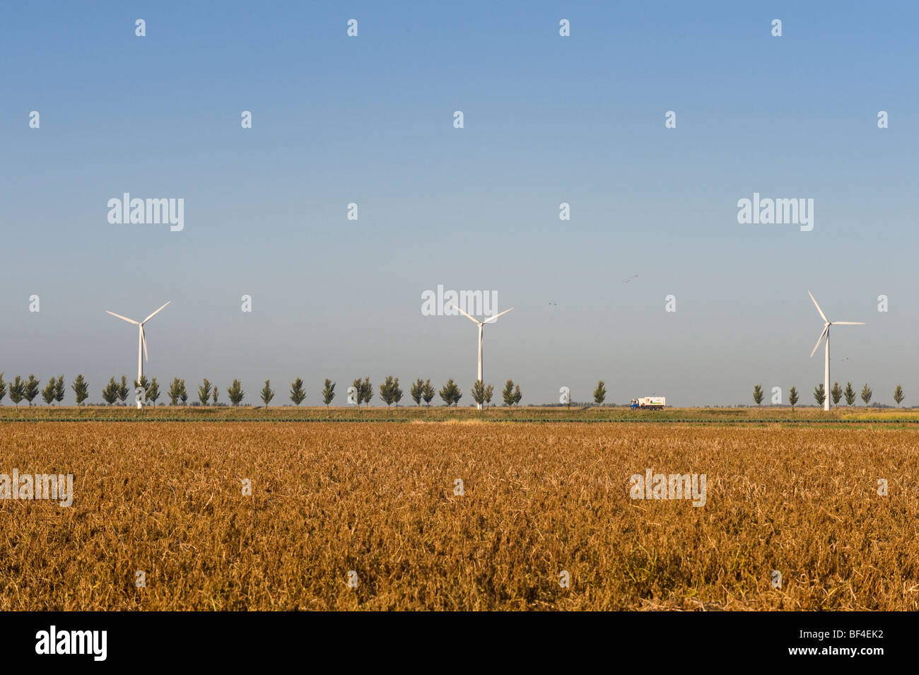 Wind turbines behind a tree-lined avenue, Zeeland, Holland, Netherlands, Europe Stock Photo