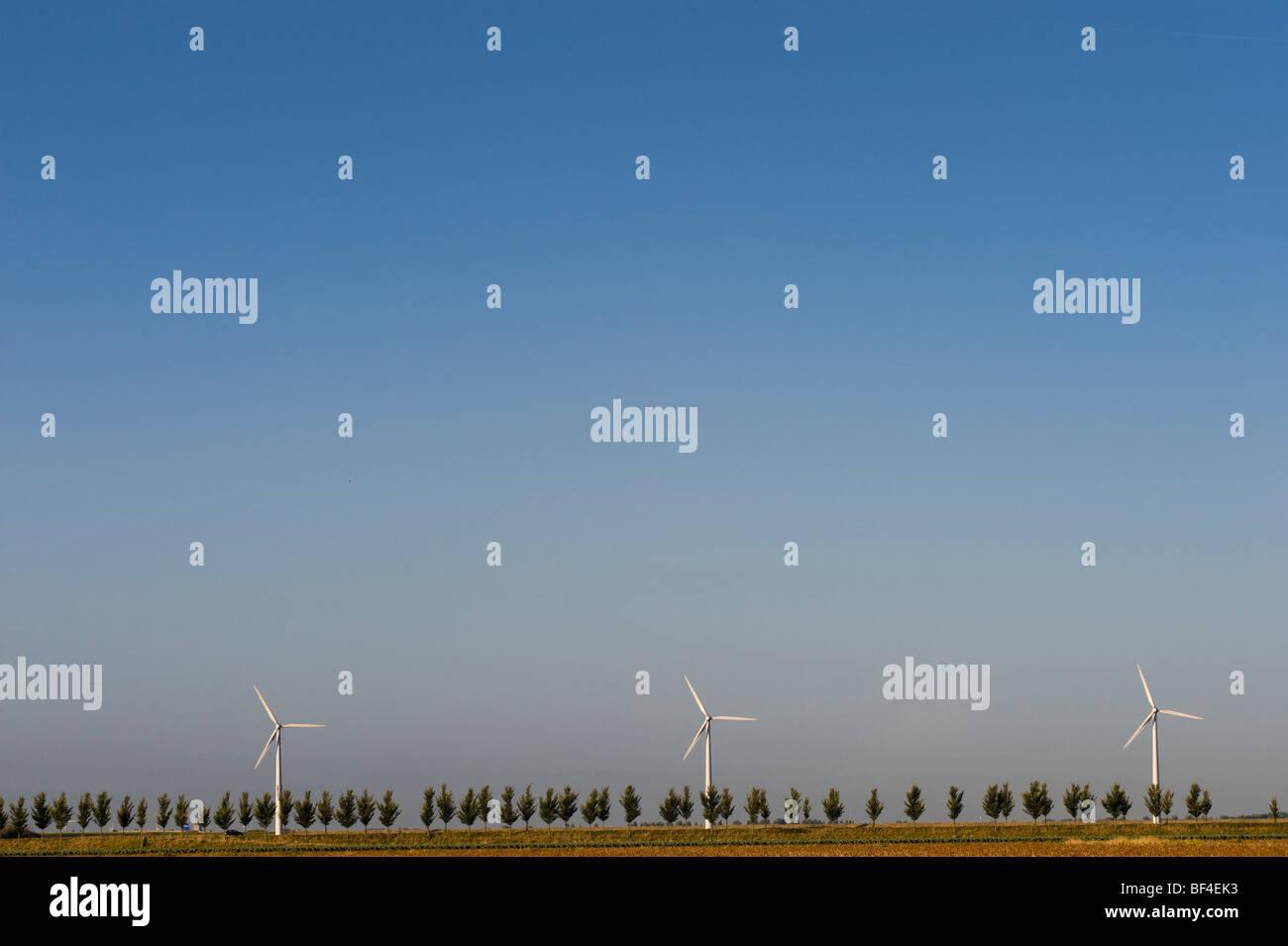 Wind turbines behind a tree-lined avenue, Zeeland, Holland, Netherlands, Europe Stock Photo