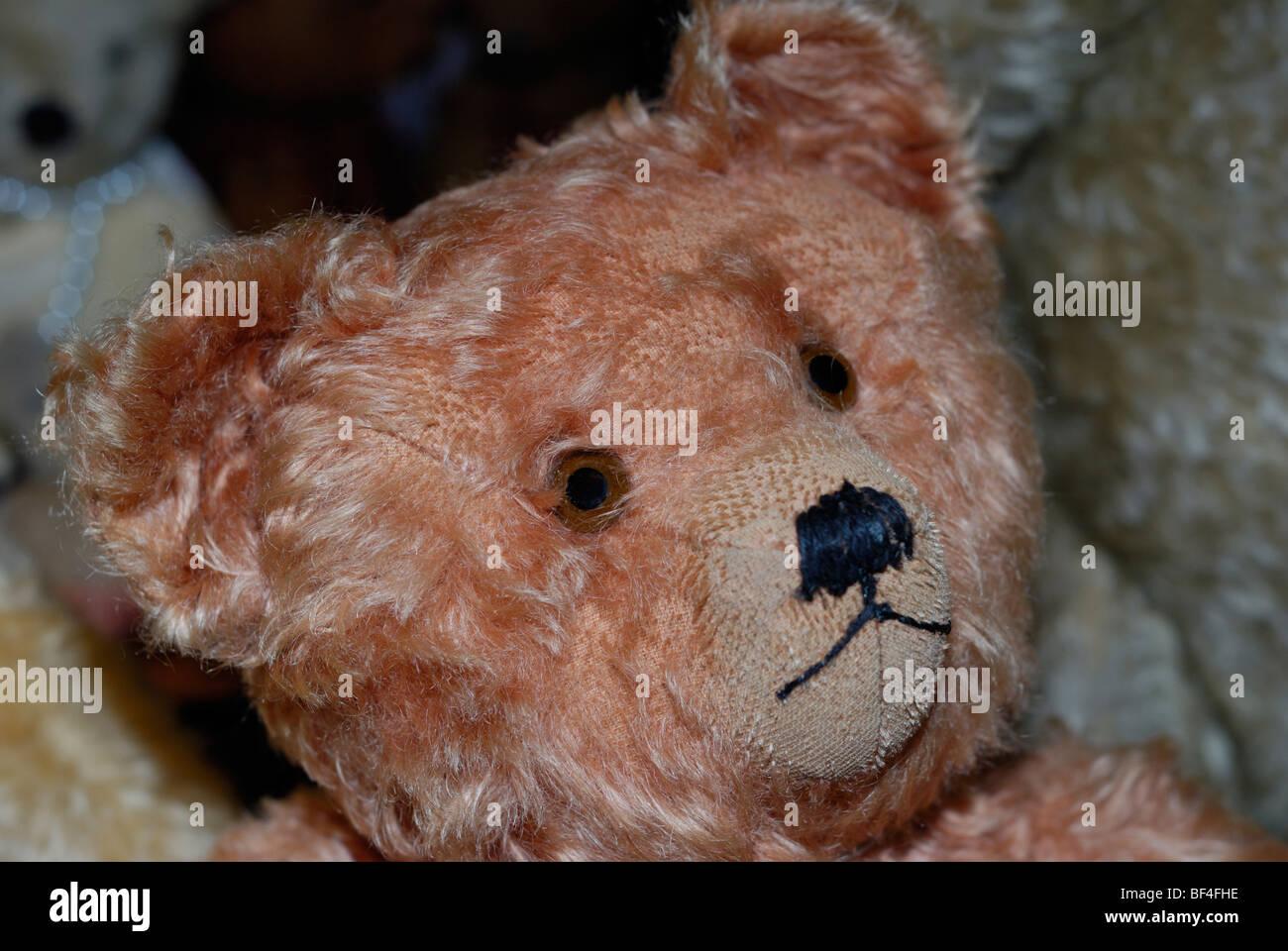 Bear dating