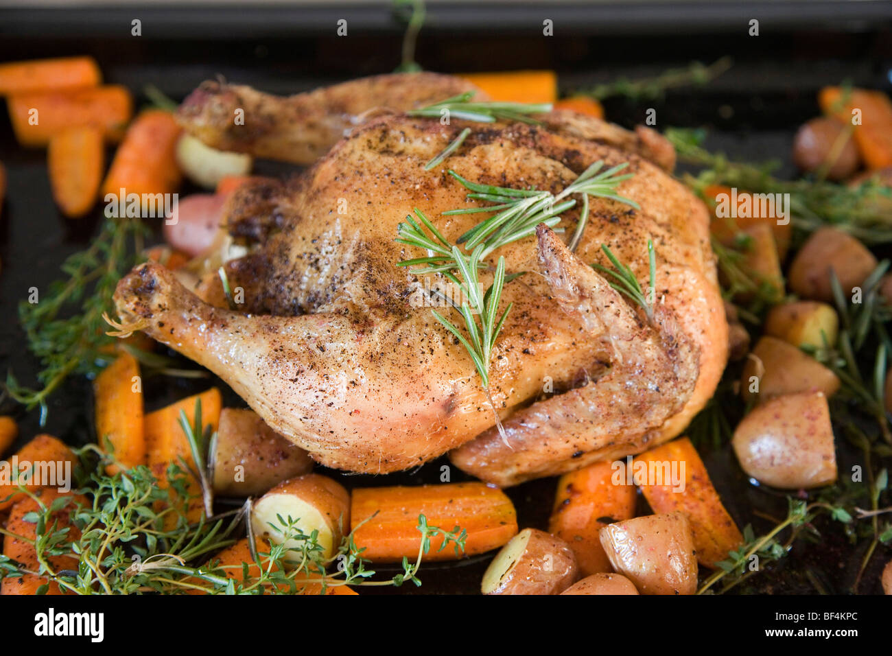 A roast chicken on a baking tray with rosemary, carrots, potatoes and sweet potatoes - Stock Image