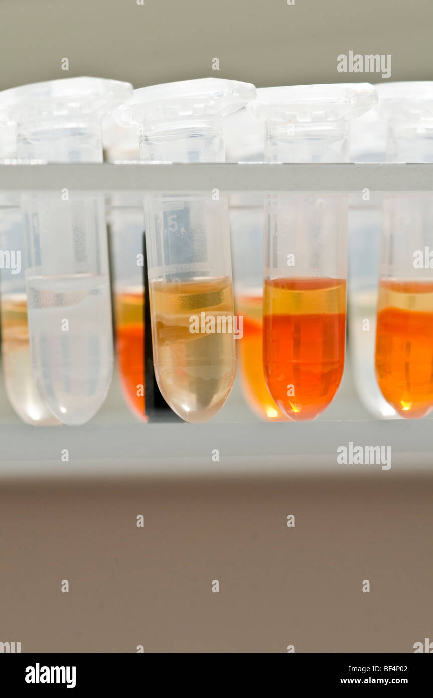 Test tubes in a laboratory Stock Photo