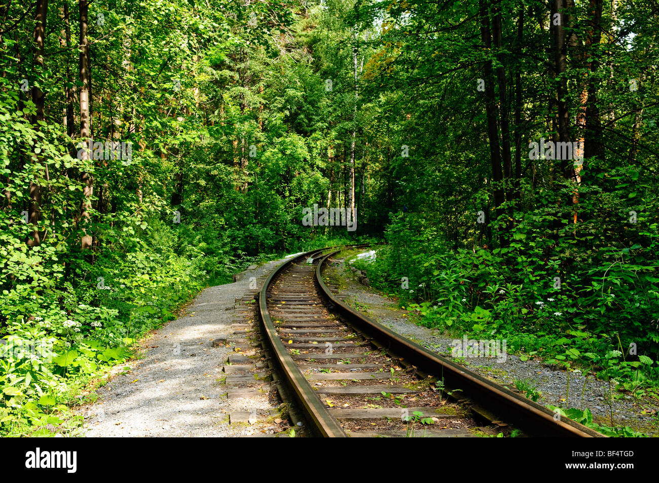 railroad track winding through forest - Stock Image
