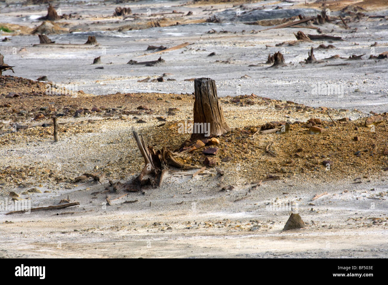 Stumps left from trees decaying from toxic industrial waste on land, Karabash, Ural, Russia - Stock Image