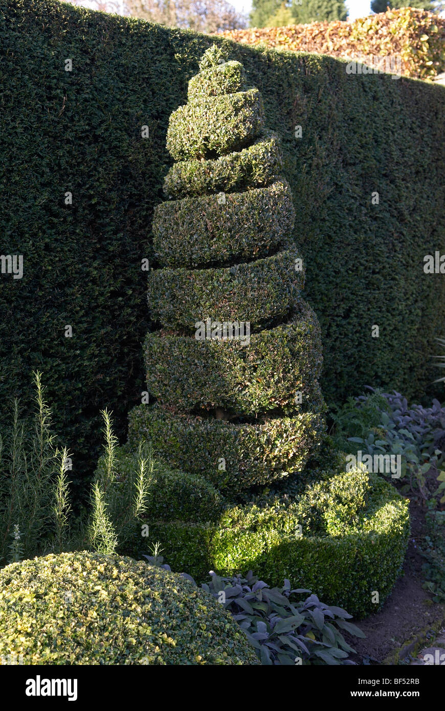 Spiral Clipped Box Topiary In Flower Bed Stock Photo Alamy