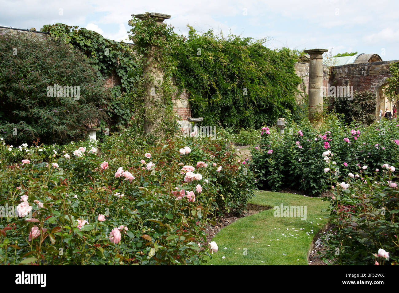 An English Country Rose Garden In Summer