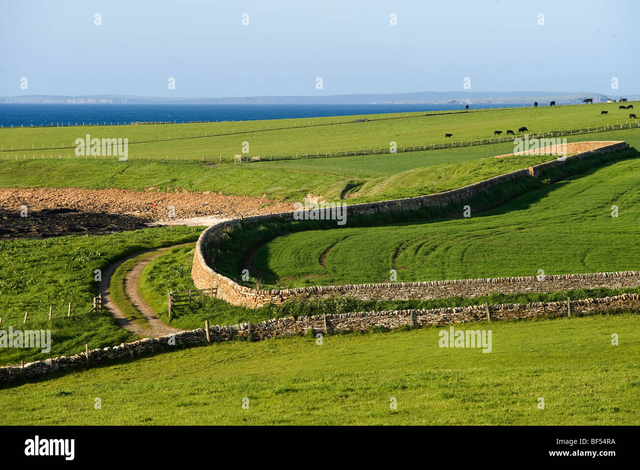 Sheep pastures in Caithness County, Scotland, United Kingdom, Europe - Stock Image