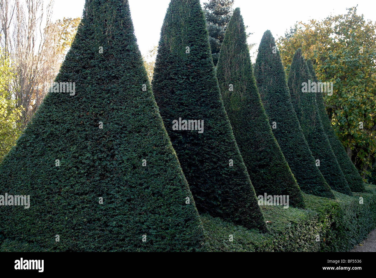 A beautiful series of clipped Yew structures forming part of a garden at Adel near Leeds - Stock Image