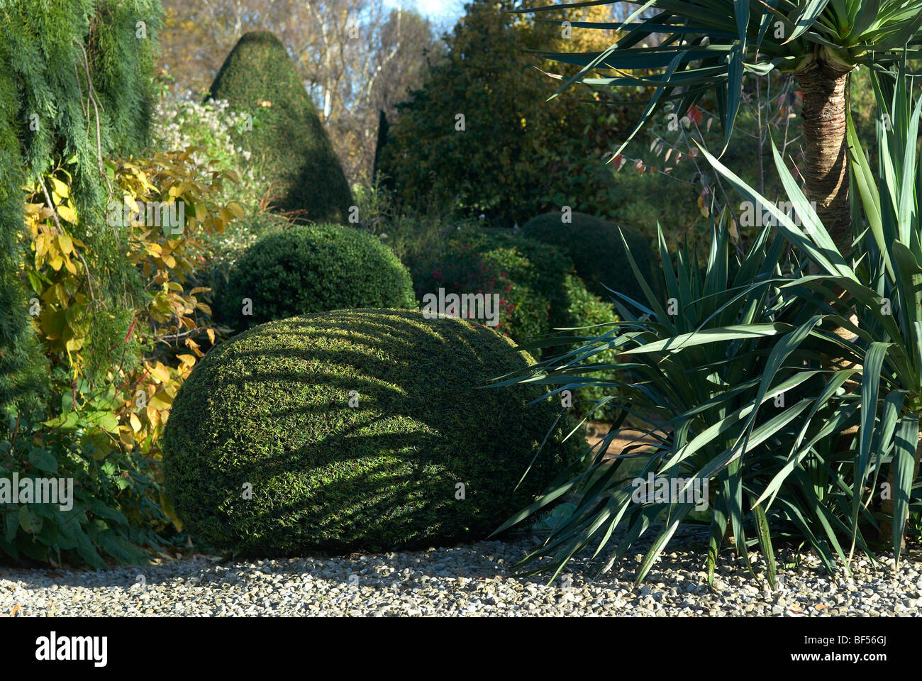 Clipped Yew hedge forming part of a topiary garden at Adel near Leeds UK England - Stock Image