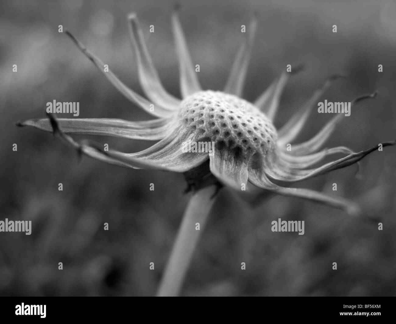 close up image of flower - Stock Image