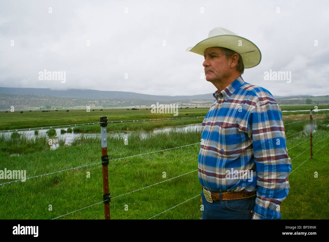 Livestock - A cattle rancher / beef producer surveys one of his pastures on a stormy day / Klamath Basin, California, - Stock Image