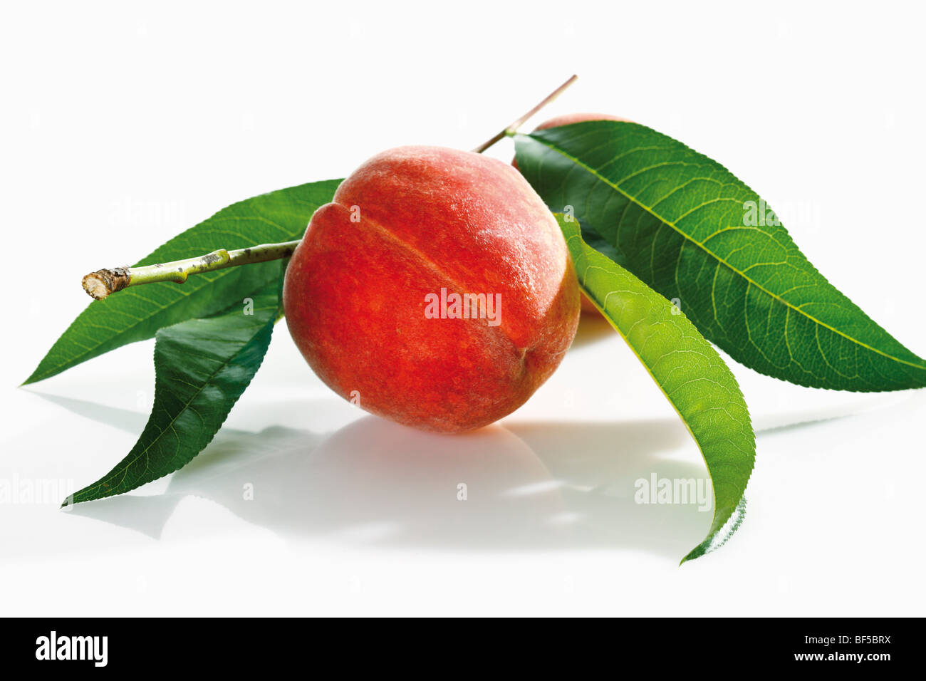 Freshly picked peach with leaves - Stock Image