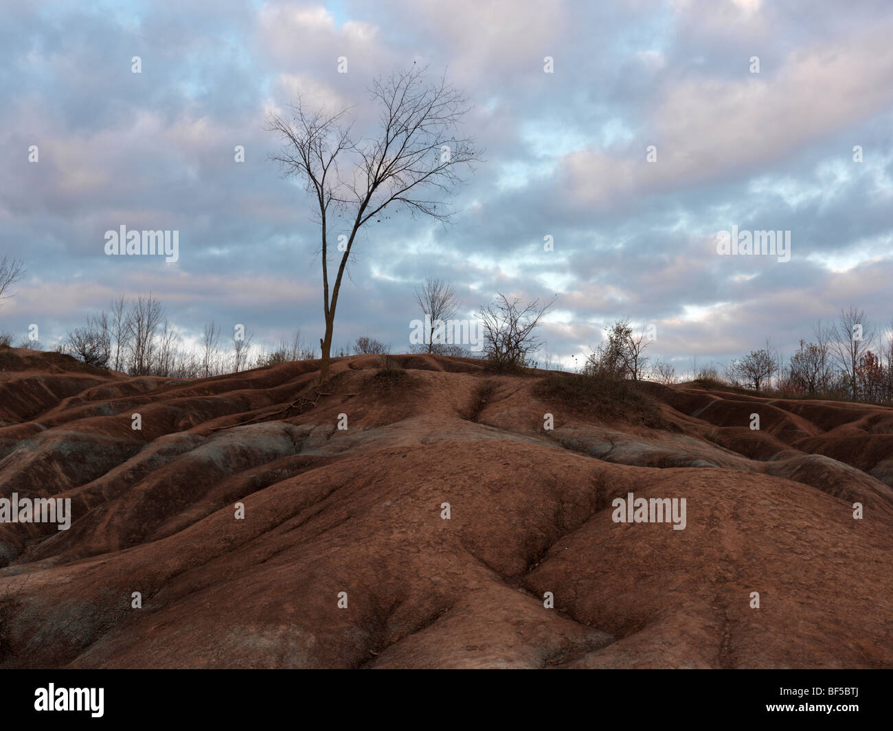 Leafless trees at Cheltenham Badlands in fall. Ontario, Canada. - Stock Image