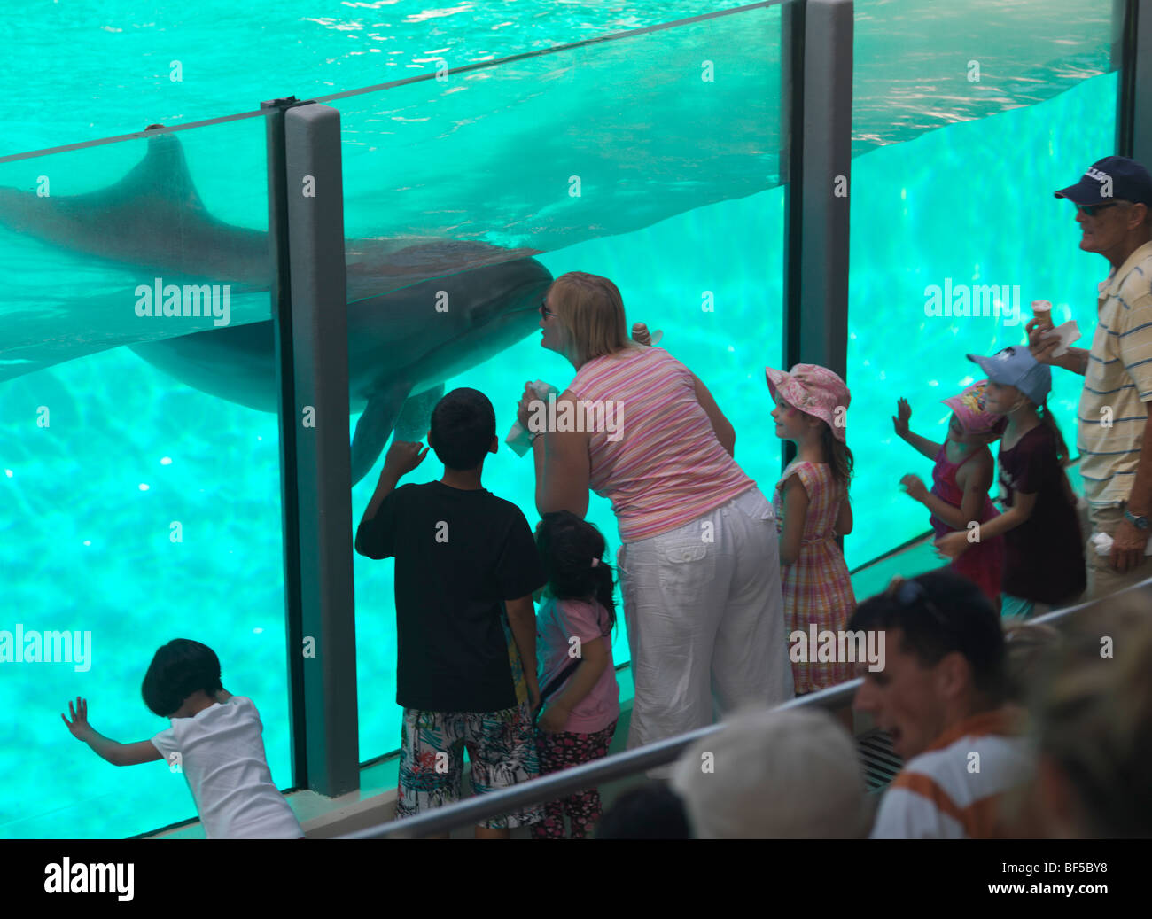 People watching dolphins in a tank - Stock Image