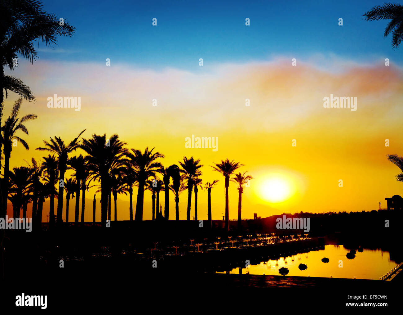 The silhouettes of palms on beautiful sunset background - Stock Image