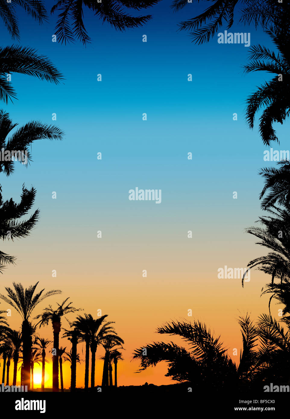 The silhouettes of palms on beautiful sunset background Stock Photo