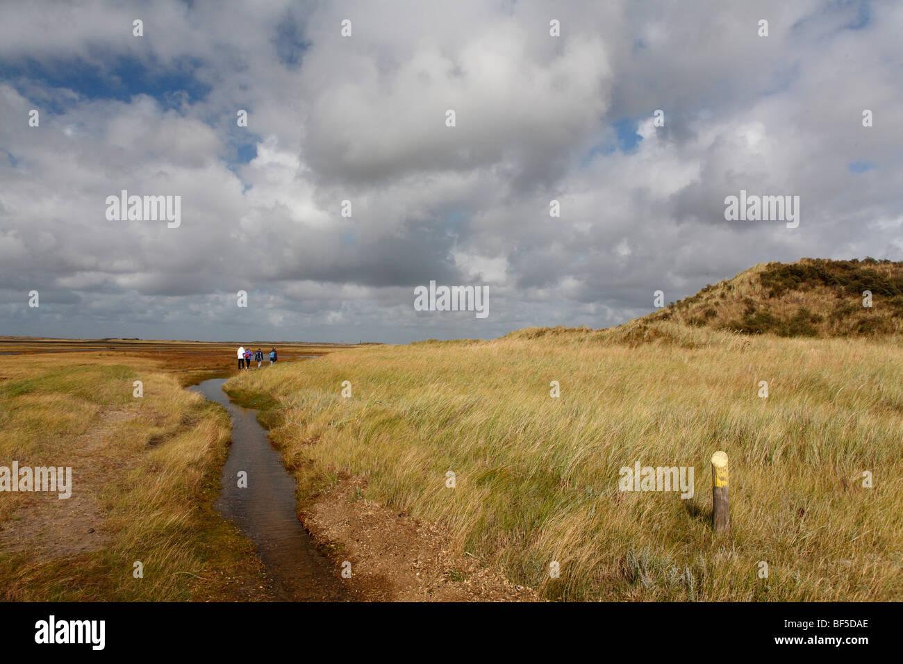 Salt marsh in De Slufter Nature Reserve, Texel, Holland, The Netherlands, Europe Stock Photo