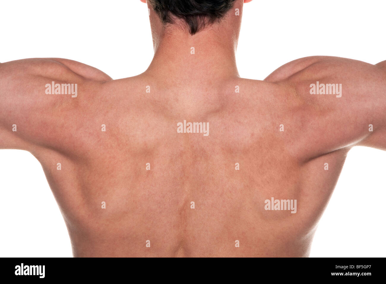 A mans back with his muscles flexed. - Stock Image