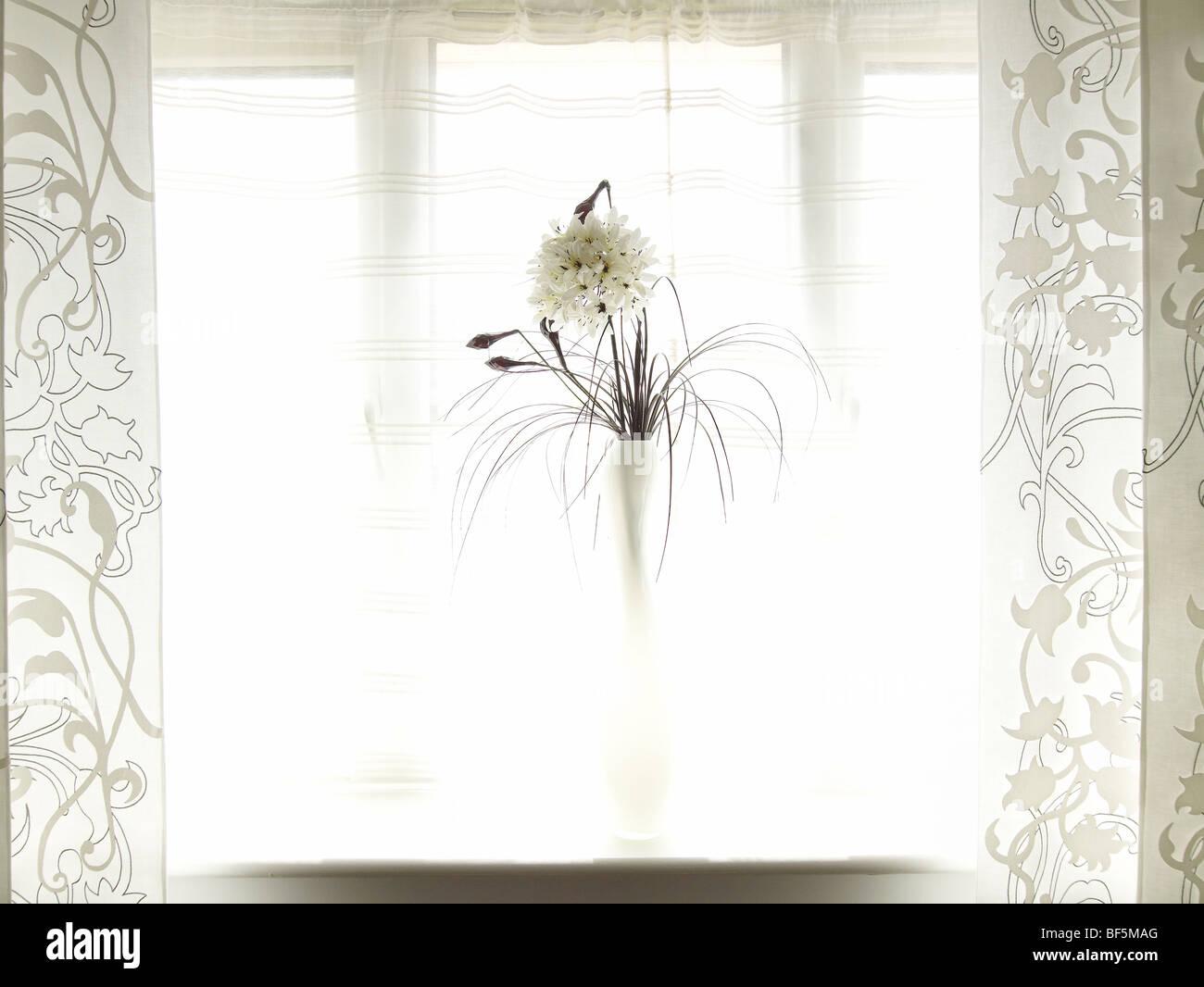 vase in window - Stock Image