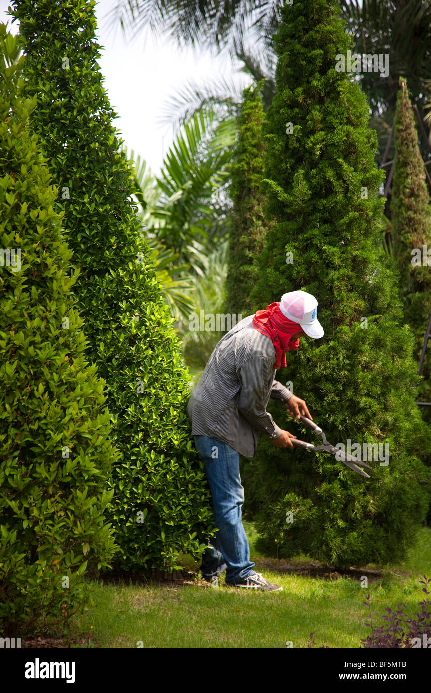 Gardener, workers clipping hedges & trees, shape. Tree Topiary at Suan Nong Nooch or NongNooch Tropical Botanical Stock Photo