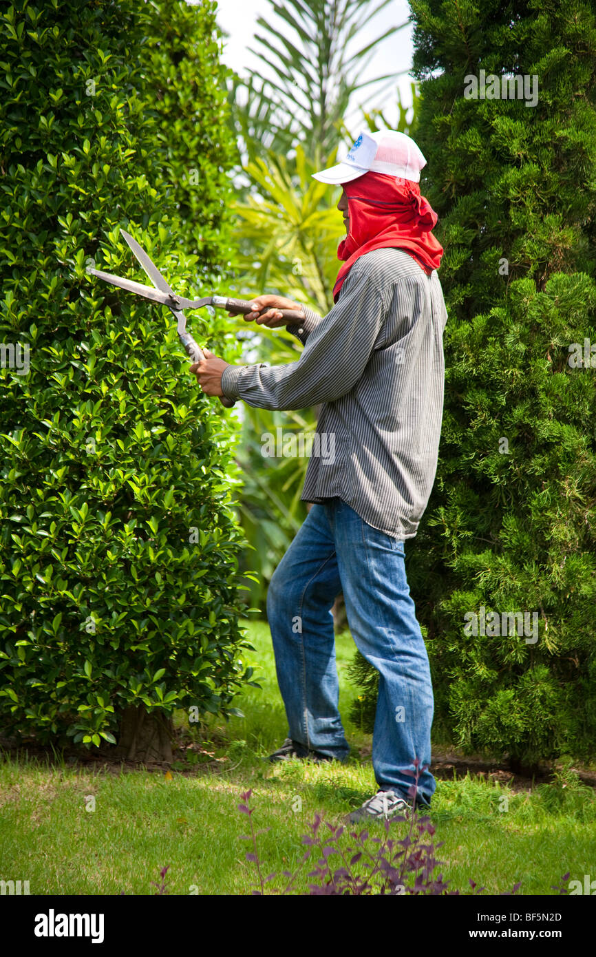 Gardener, workers clipping hedges & trees, shape. Tree Topiary at Suan Nong Nooch or NongNooch Tropical Botanical - Stock Image