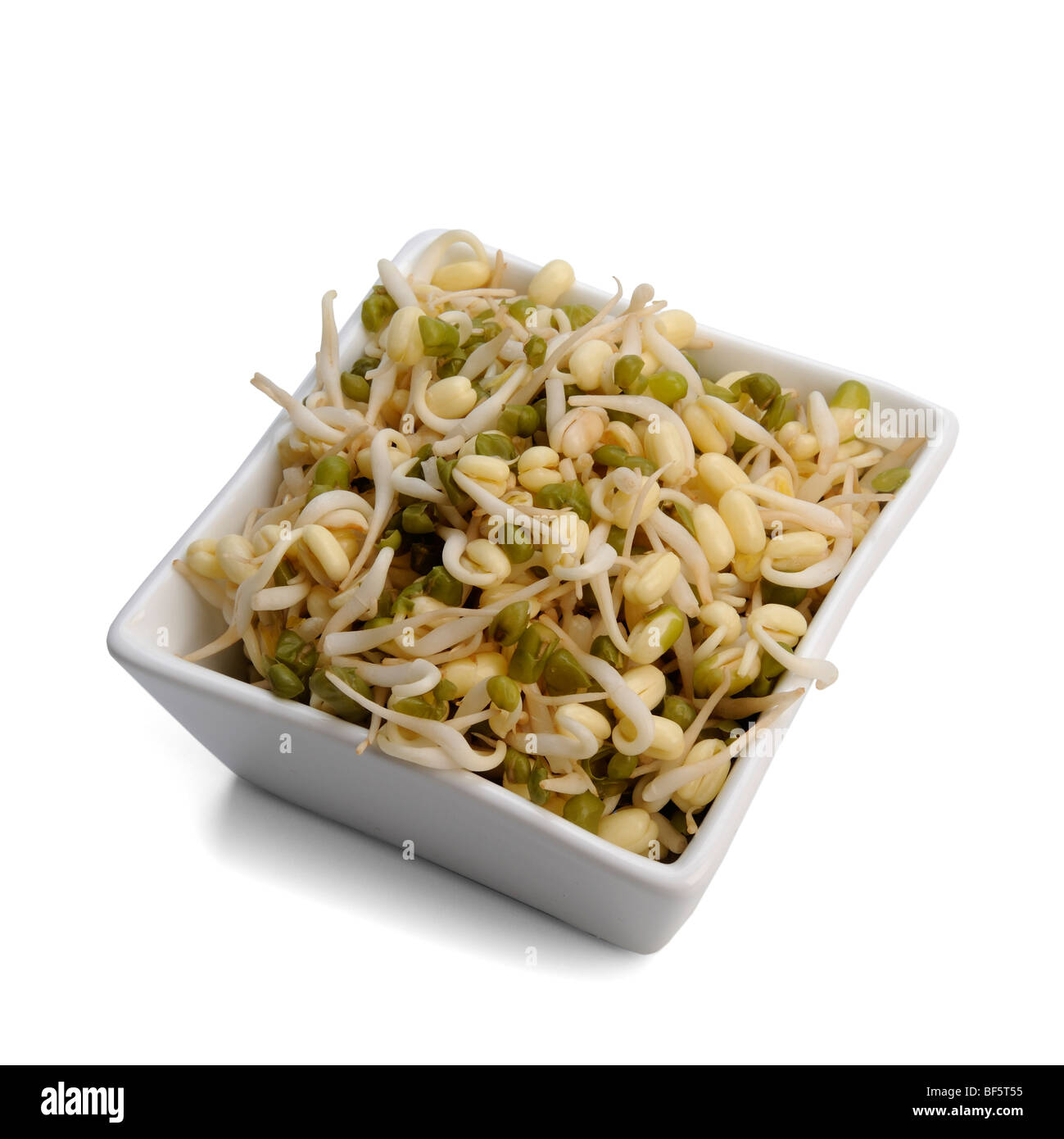 Bean Sprouts in dish - Stock Image