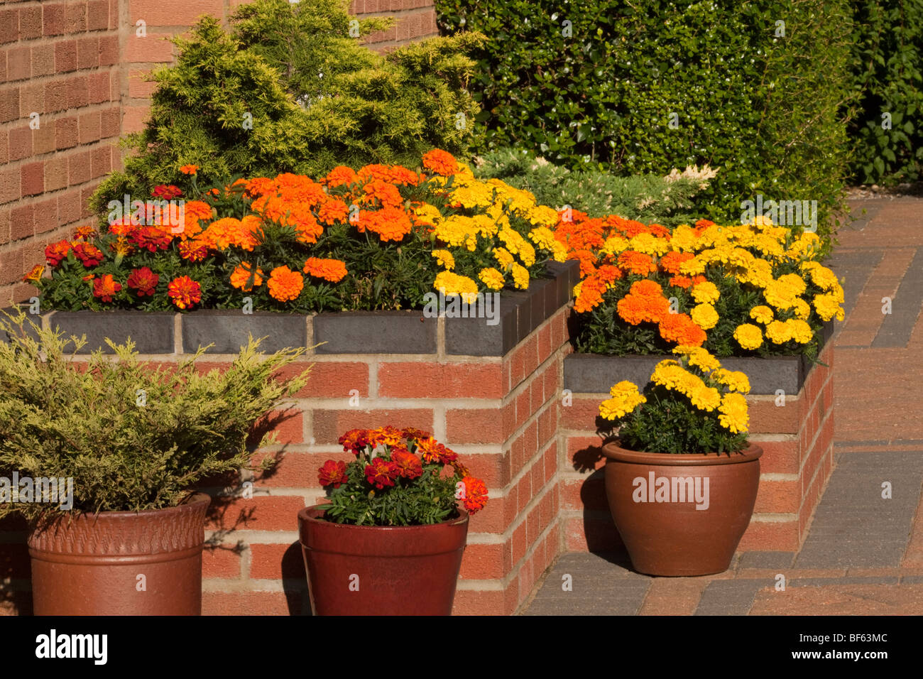 Raised Flower Bed on a Patio - Stock Image