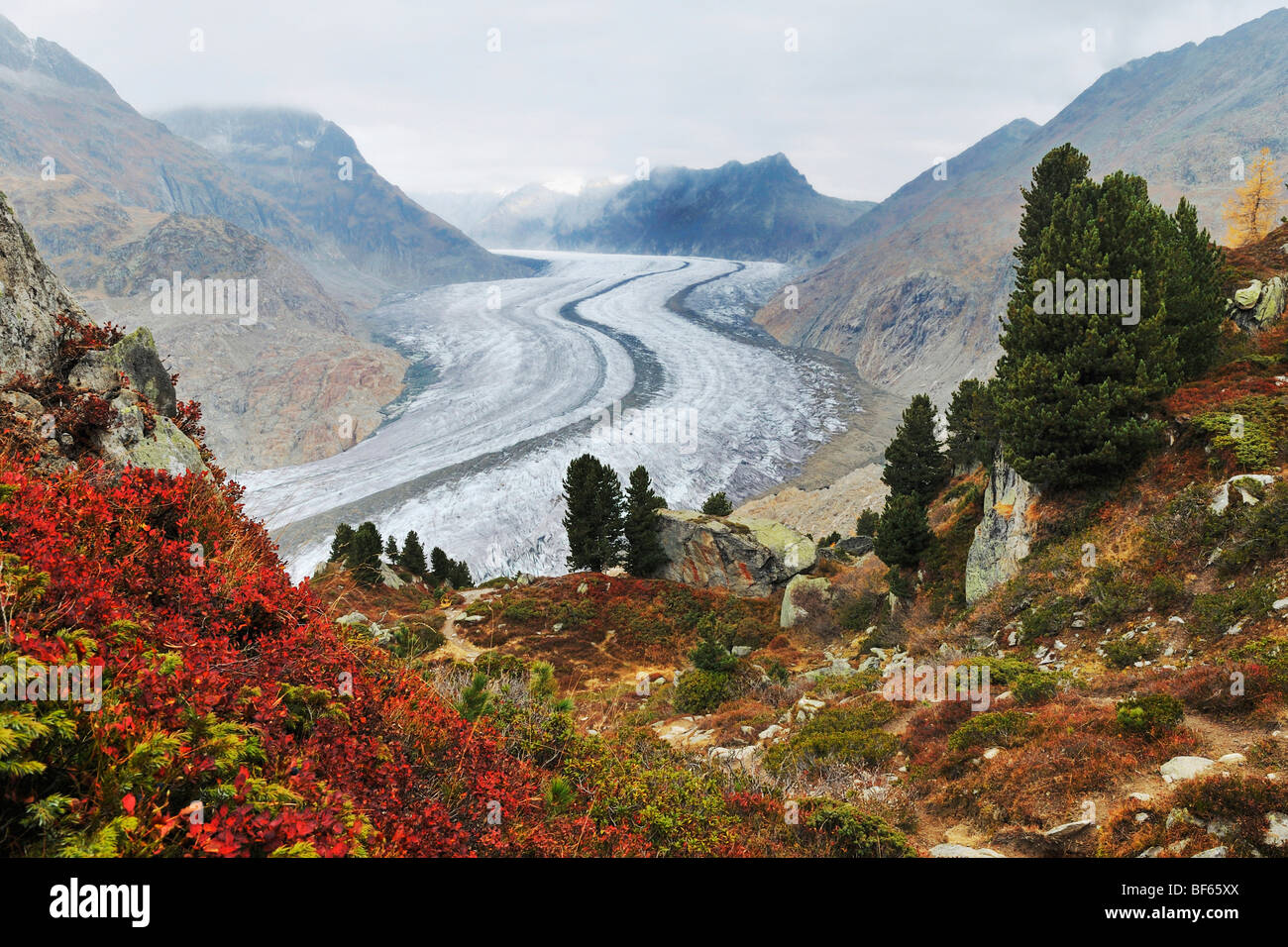 Aletsch Glacier, UNESCO World Heritage Site Jungfrau-Aletsch-Bietschhorn, Goms, Valais, Switzerland, Europe - Stock Image
