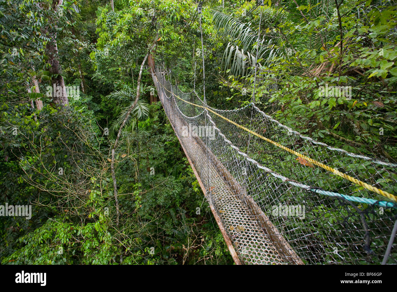 CANOPY WALKWAY through primary rainforest Iwokrama forest reserve Guyana. & CANOPY WALKWAY through primary rainforest Iwokrama forest reserve ...
