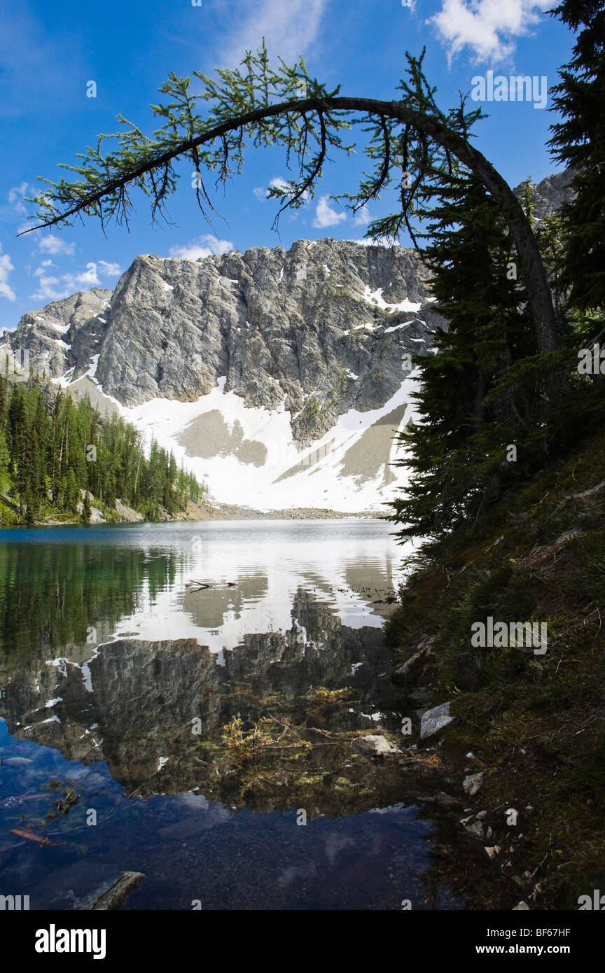 A Larch tree bent over above Blue Lake in the North Cascades near Washington Pass in Washington, USA. - Stock Image