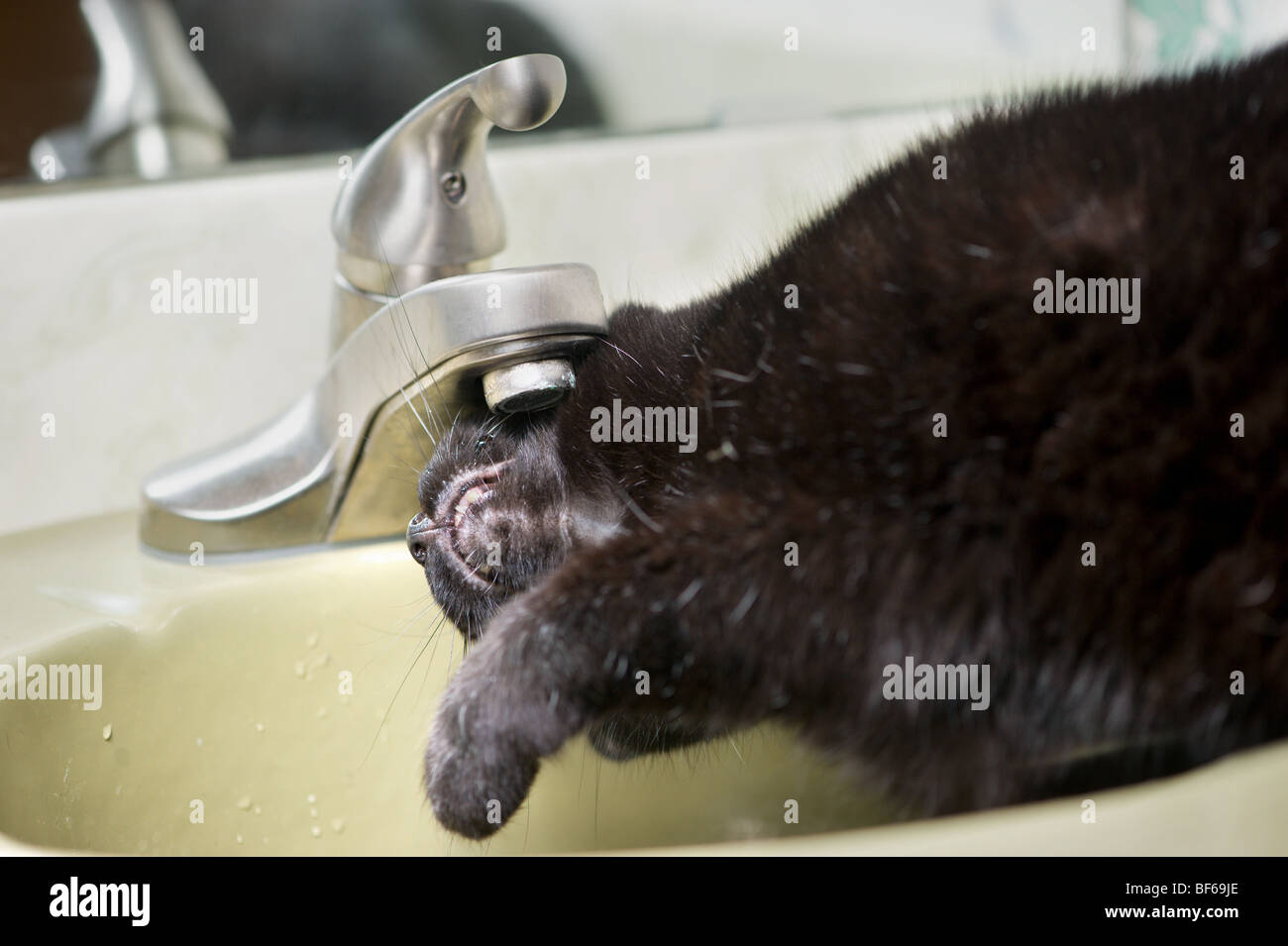 Black cat drinking water out of the sink - Stock Image