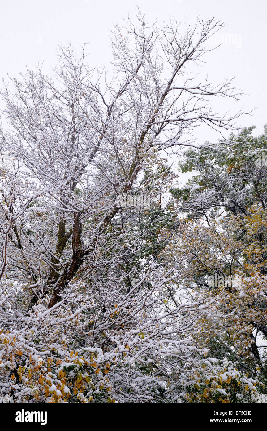 Early Snow in October. - Stock Image