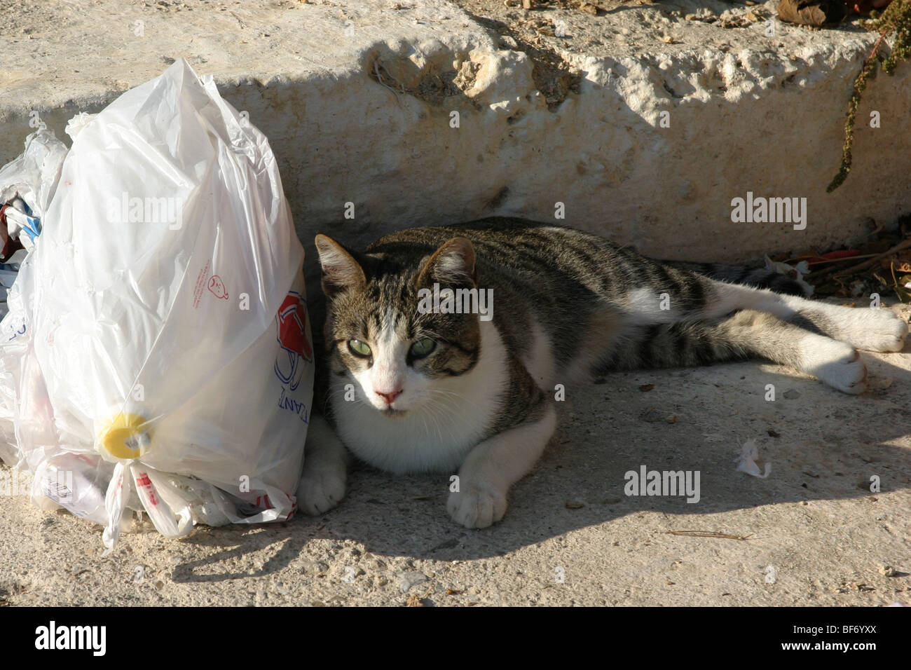 Cat lying next to rubbish bag - Stock Image