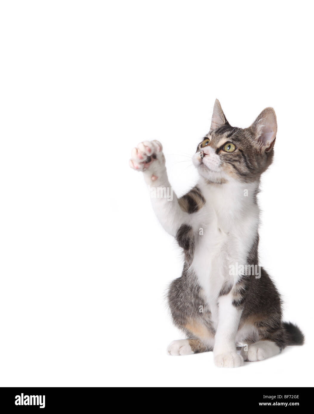 Cute Kitten Pawing at Something in the Air - Stock Image
