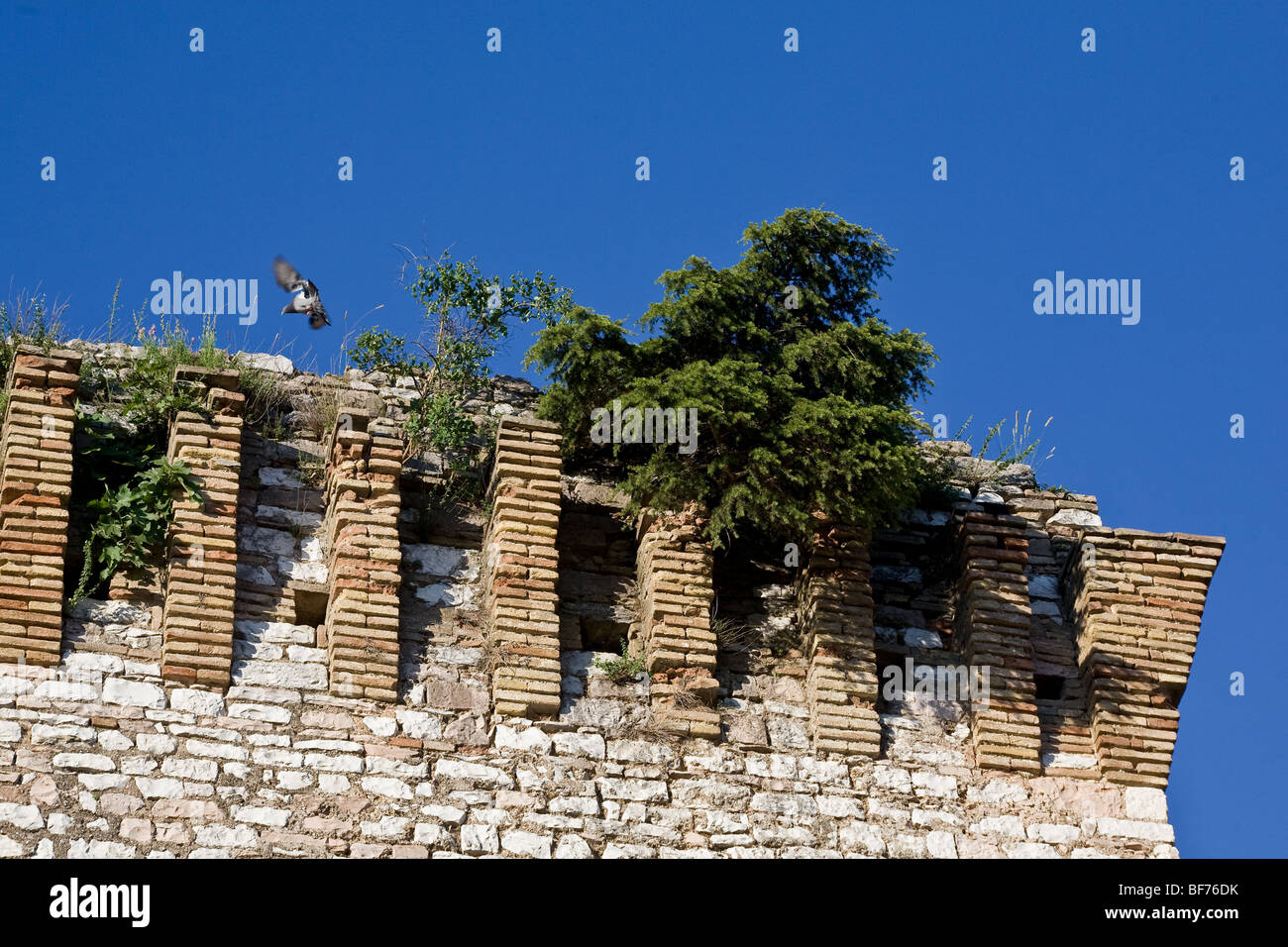 A bird planes over an ancient medieval italic tower in Spello, Italy - Stock Image