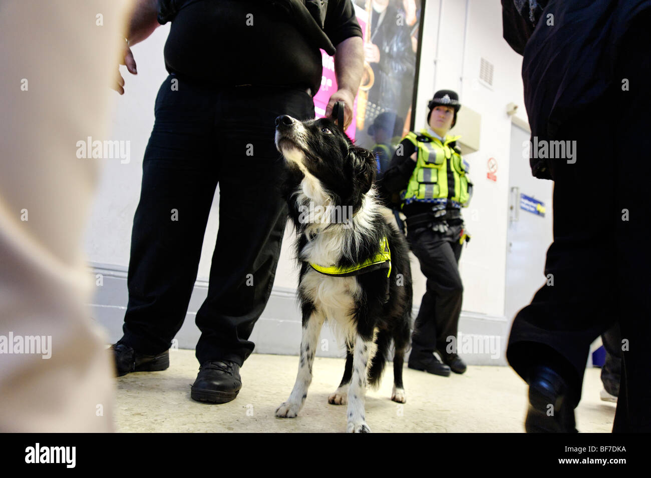 British Transport Police using  a drugs sniffer dog during routine neighborhood policing at Lewisham train station. - Stock Image