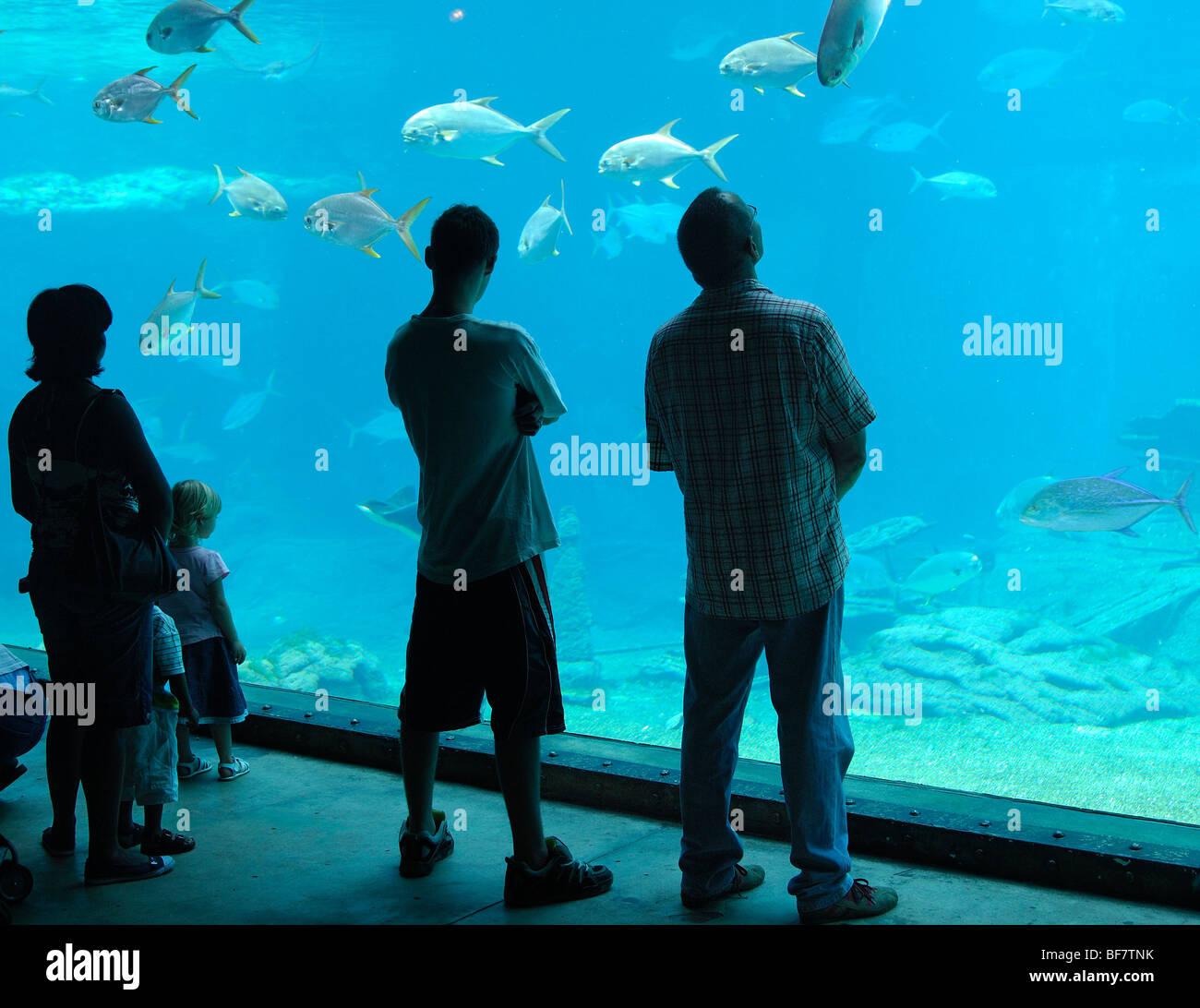 South Africa, Durban : the aquarium - Stock Image